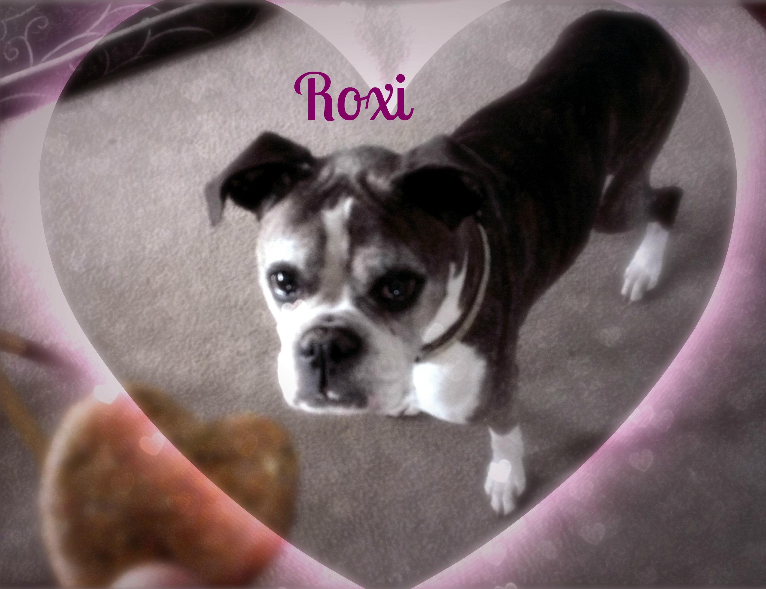 roxi-valentines2x3.jpg