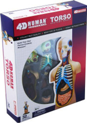 4D Vision Visible Human Torso Anatomy Model Kit - 26051