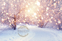Snow Christmas Trees with light bokeh - photographer backdrop Christmas