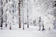 Snow Scene 001