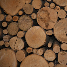 Tree Log Design Photography Backdrop