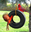 Bird Feeder Tire Swing