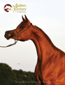The Arabian Breeders' Magazine - Volume II Issue I