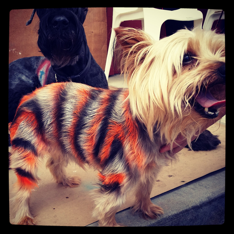 dog-costume-1-.jpg