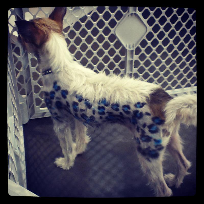 dog-costume-105-.jpg