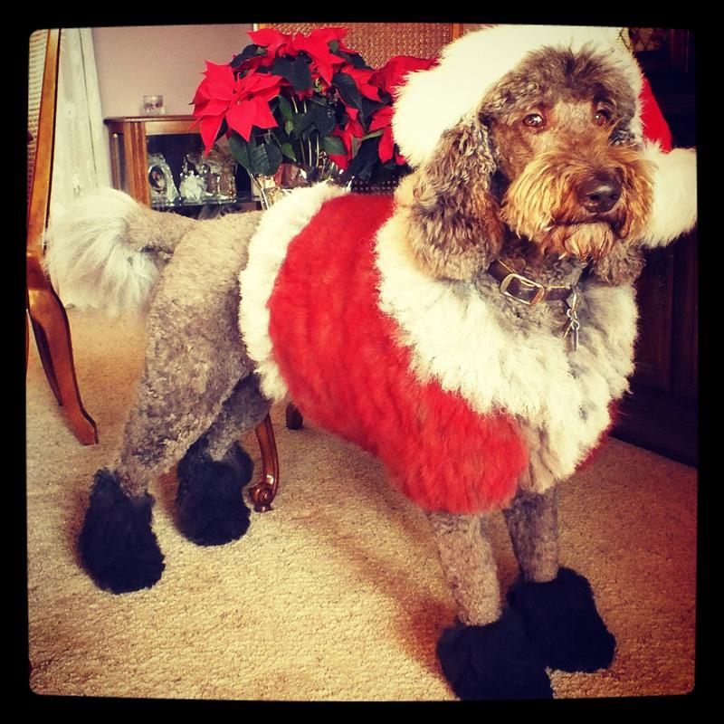 dog-costume-107-.jpg