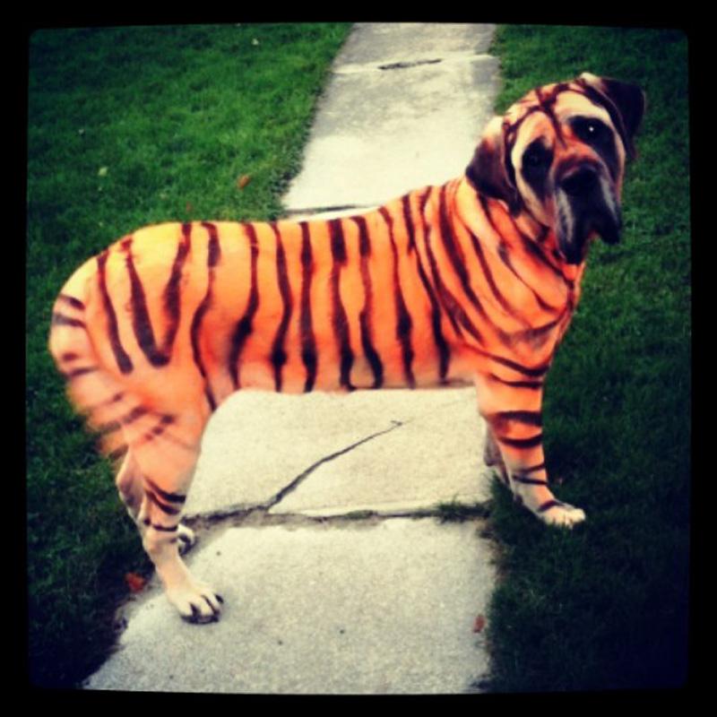 dog-costume-108-.jpg