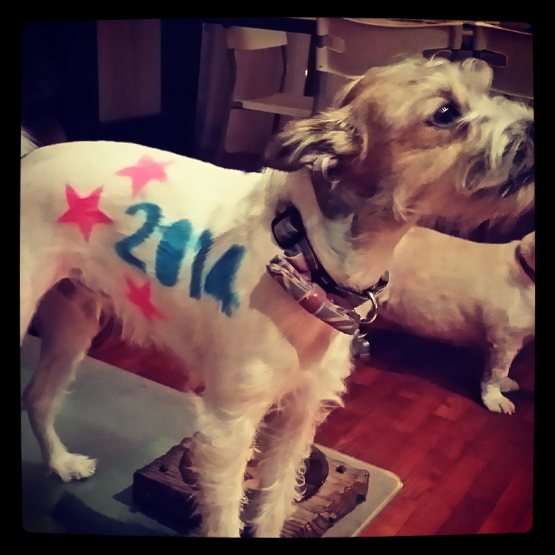 dog-costume-110-.jpg