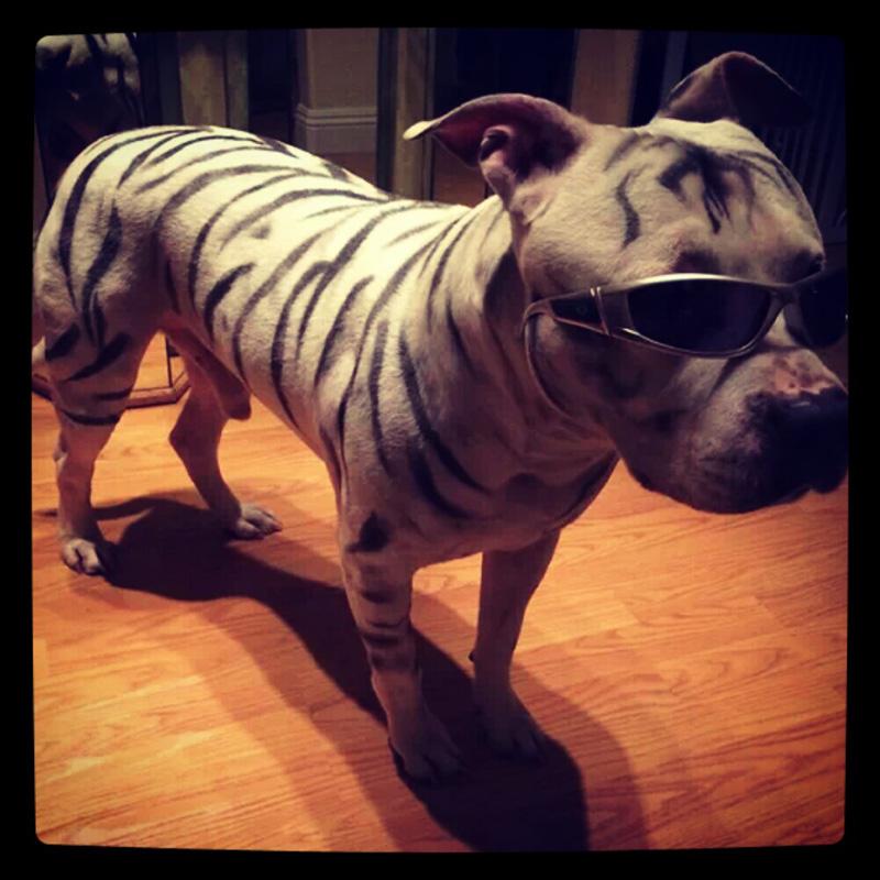 dog-costume-113-.jpg