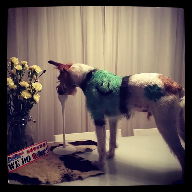 dog-costume-115-.jpg