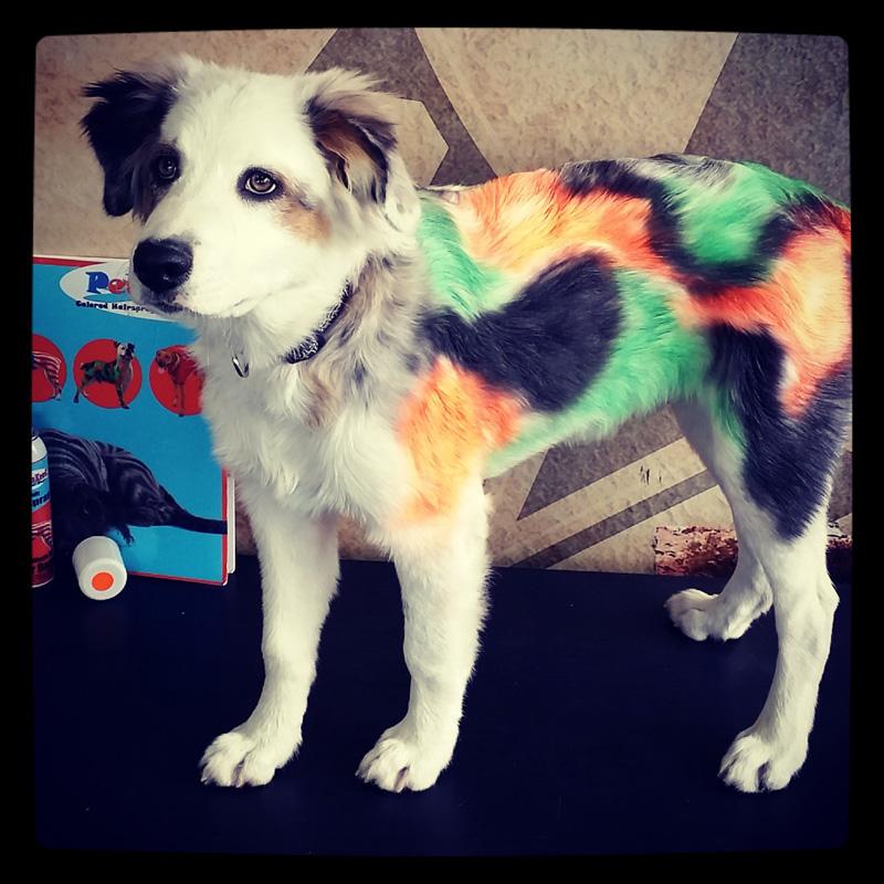 dog-costume-118-.jpg