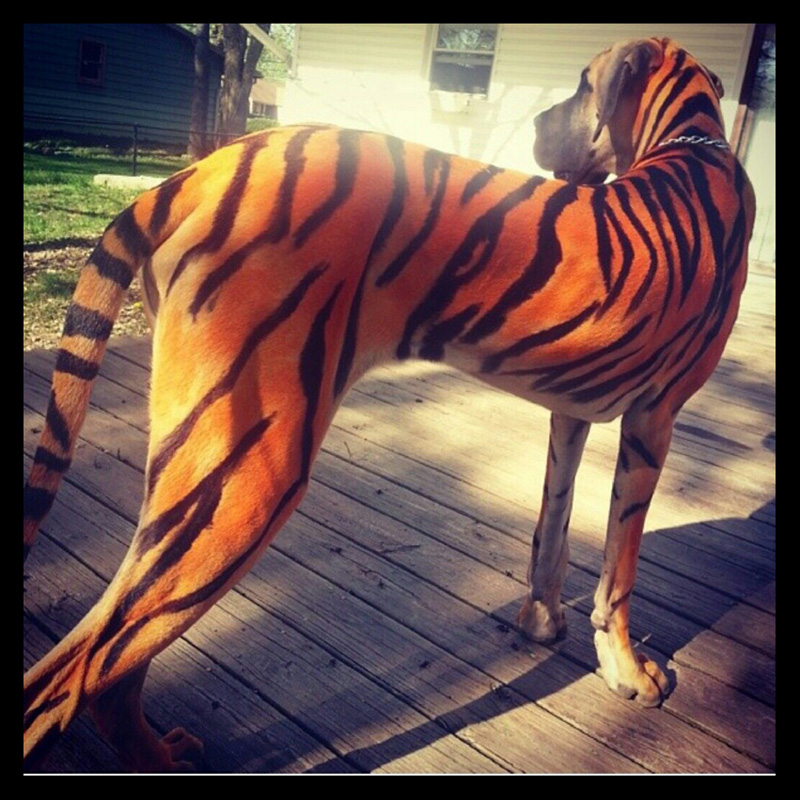 dog-costume-120-.jpg