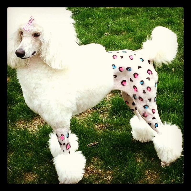 dog-costume-121-.jpg