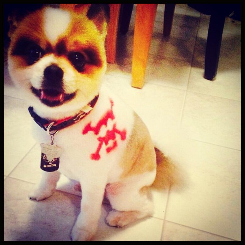 dog-costume-122-.jpg