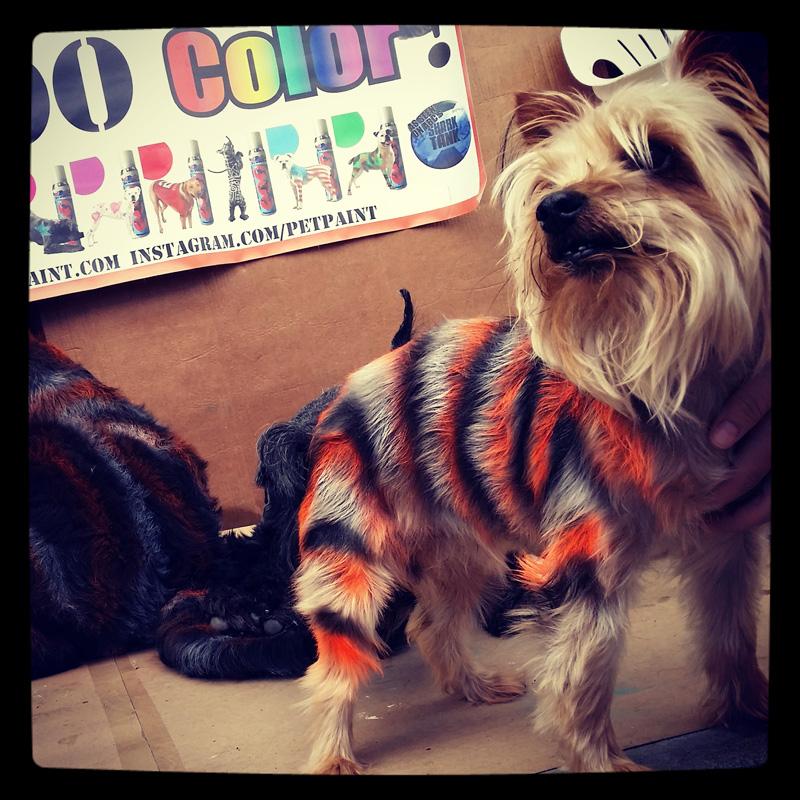 dog-costume-123-.jpg