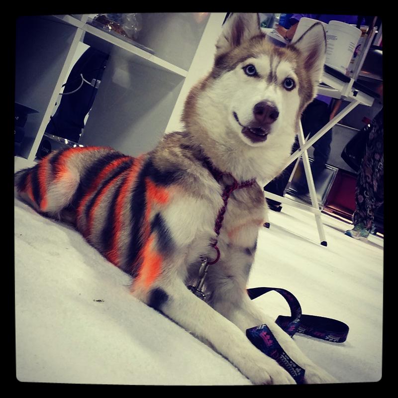 dog-costume-125-.jpg