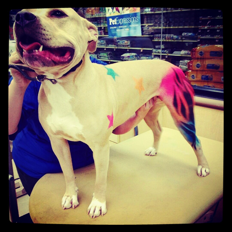 dog-costume-126-.jpg