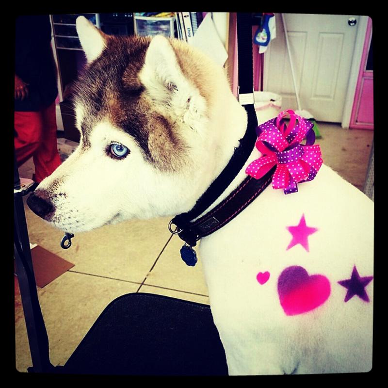 dog-costume-128-.jpg