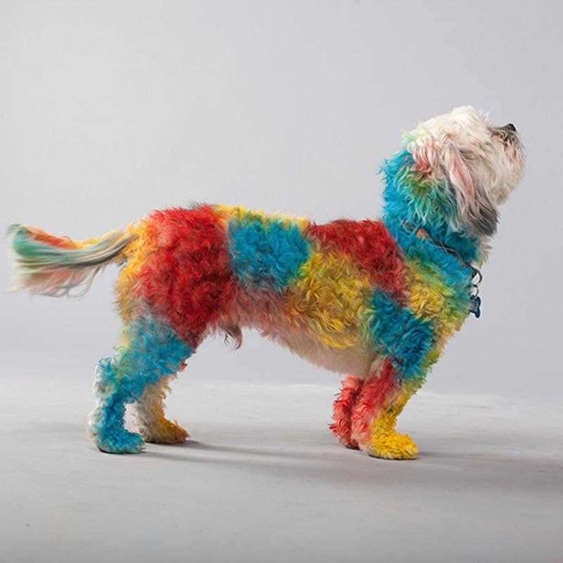 dog-dye-10.jpg