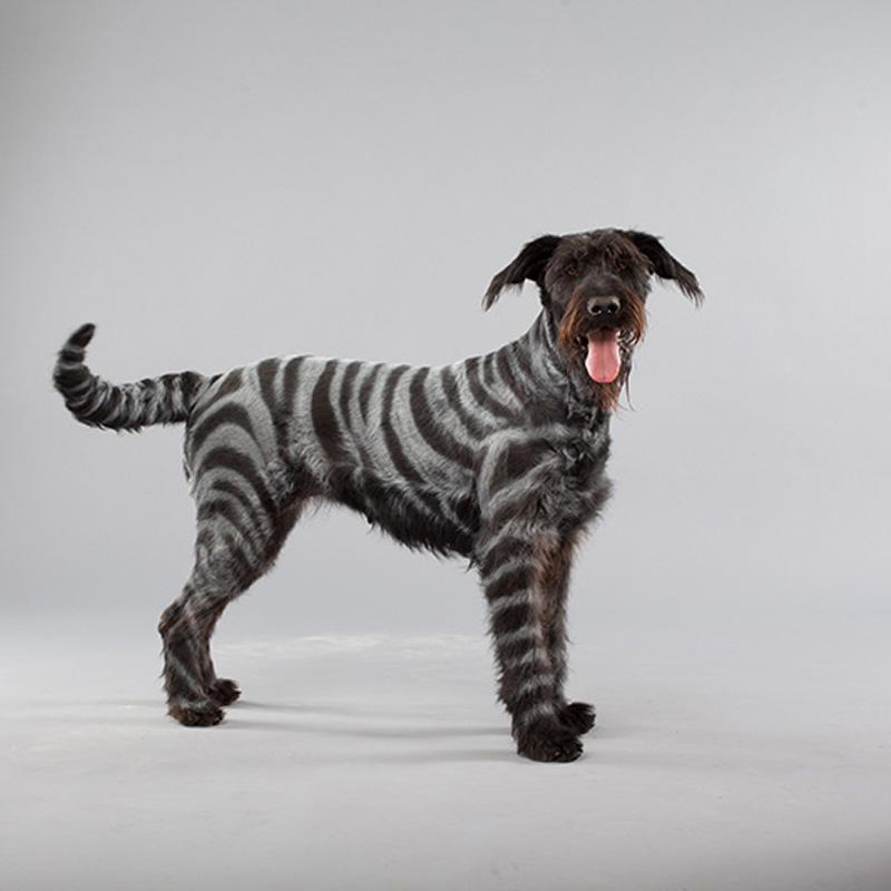 dog-dye-2.jpg