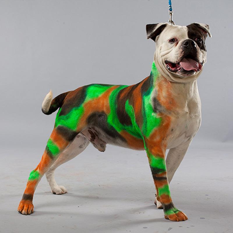 dog-dye-5.jpg