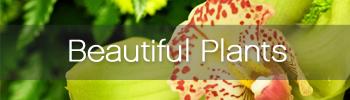 Beautilful Plants