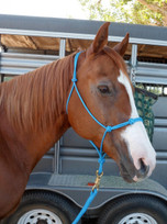 B & H Stiff Rope Halter With 4 Knots On The Noseband (one on each side and two towards the center of the noseband). Compare to Your Favorite Down Under Clinicians Halter. All stiff rope halters will be made with 4 knots on the noseband unless ordering foal and weanling sizes, then it will be made with 2 knots. All stiff rope halters ordered with optional braided nosebands will have two knots to allow for the braiding in between the knots.