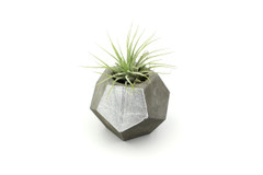 Maple + Mauve - Concrete Planter - Silver