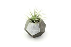 Maple + Mauve - Concrete Planter - Silver