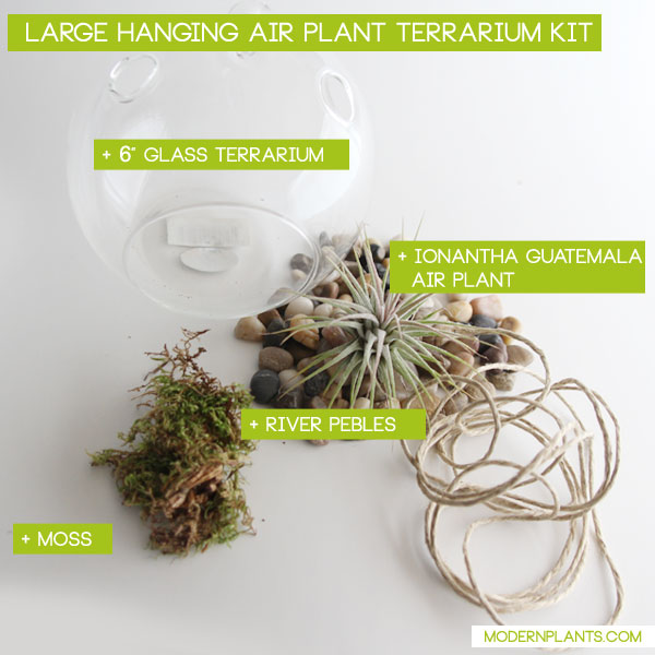 big-air-plant-terrarium-kit.jpg