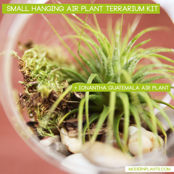 hanging-air-plant-terrarium-kit-small-2.2.jpg