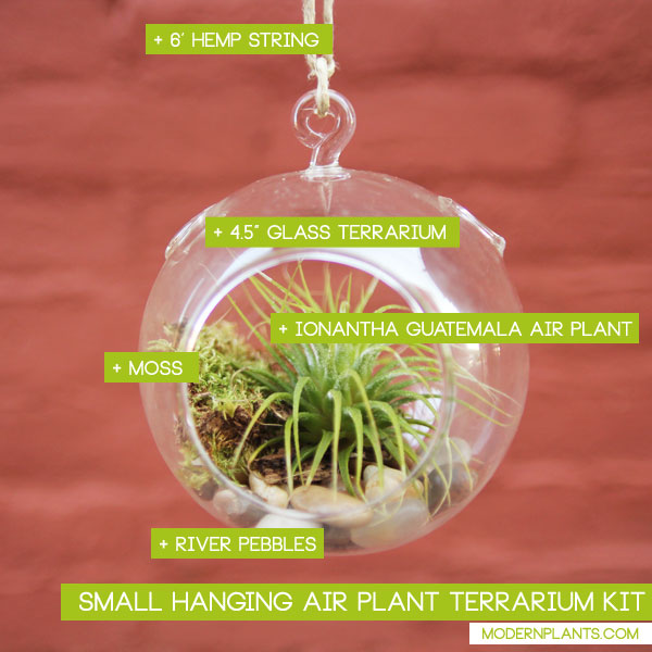 hanging-air-plant-terrarium-kit-small-showcase.jpg