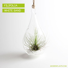 Hanging Air Plant Terrarium Kit - Drop Glass Tillandsia