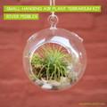 Air Plant Terrarium Globe Kit - Small