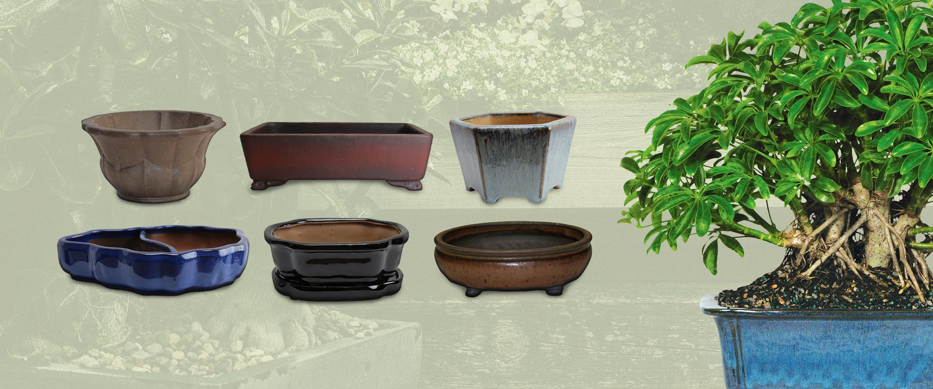 Bonsai Tree Bamboo Plants Indoor Outdoor Pots And Tools
