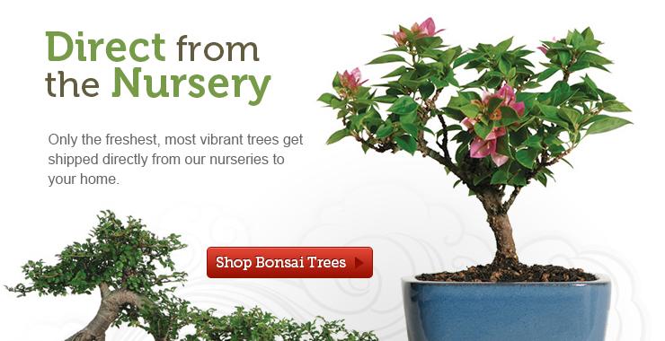 banner-trees.jpg
