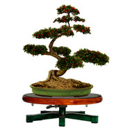 Bonsai Turntable Table Top Workstand