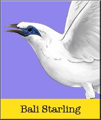 bali-starling.jpg