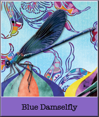 blue-damselfly.jpg