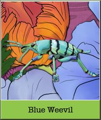 blue-weevil.jpg