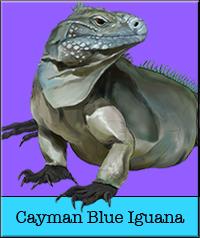 cayman-blue.jpg