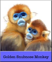 golden-snub.jpg