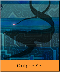 gulper-eel.jpg