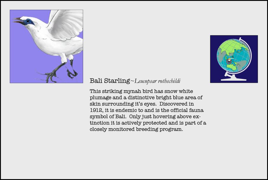 info-bali-starling.jpg