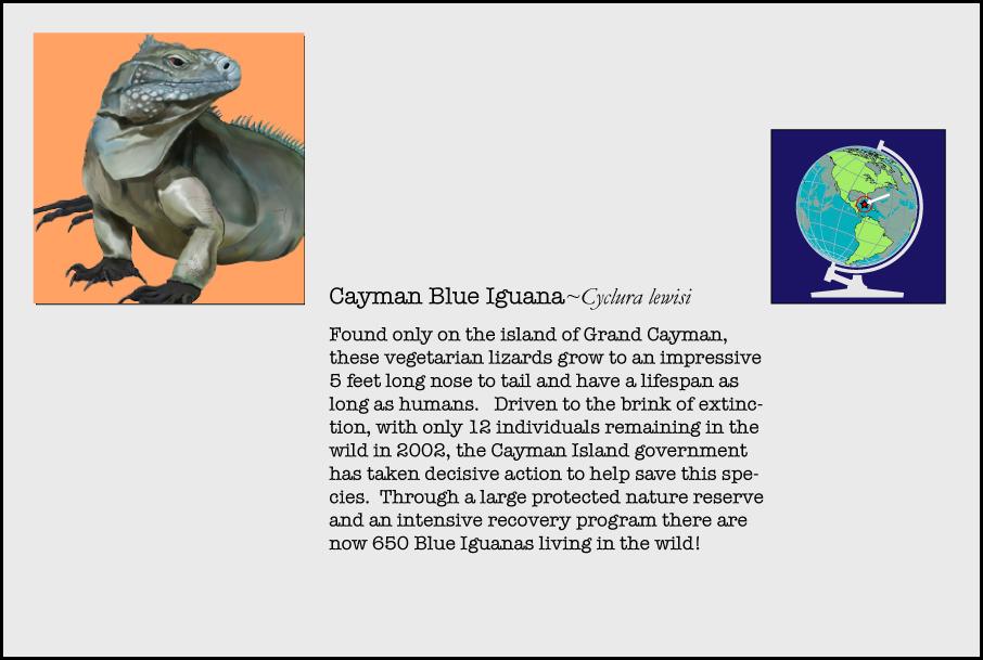 info-cayman-blue-iguana.jpg