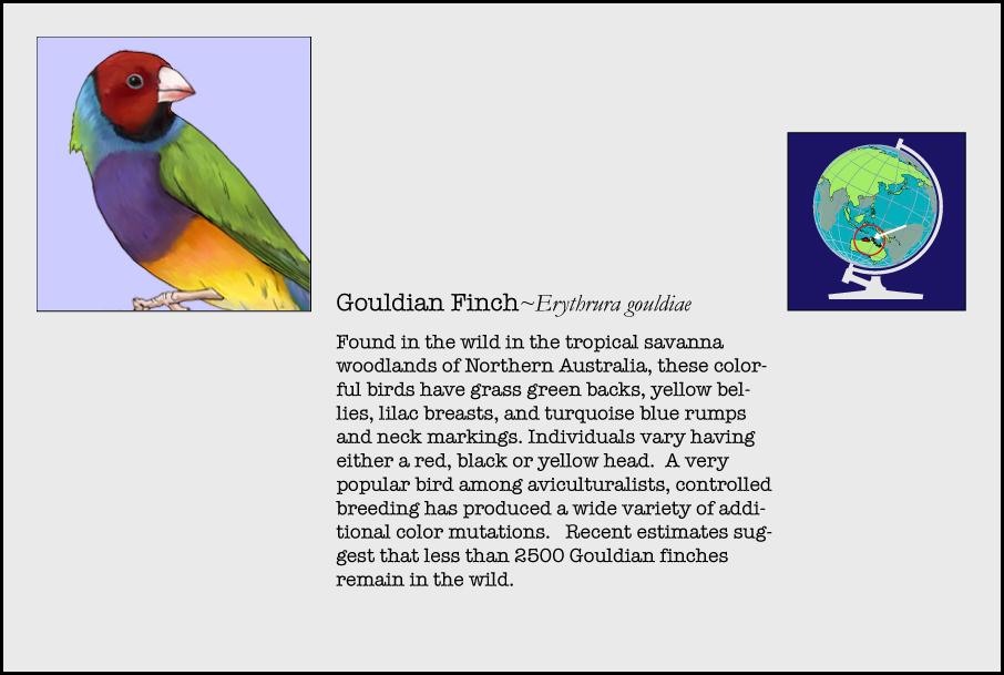 info-gouldian-finch.jpg