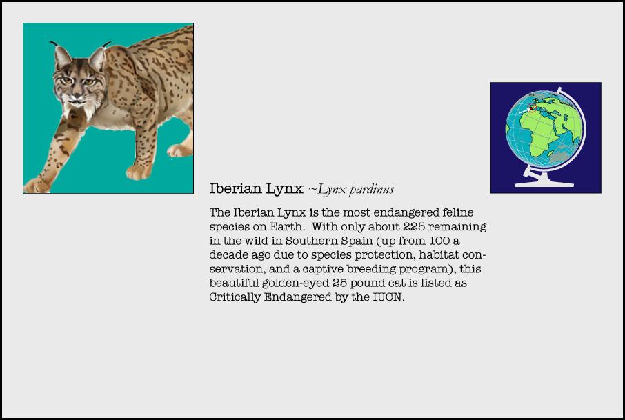 info-iberian-lynx.jpg