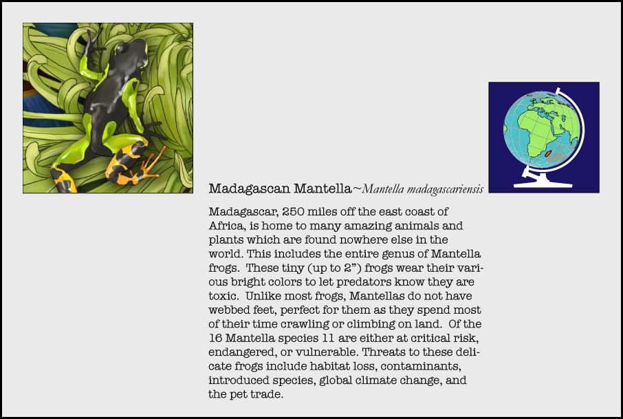 info-madagascan-mantella.jpg