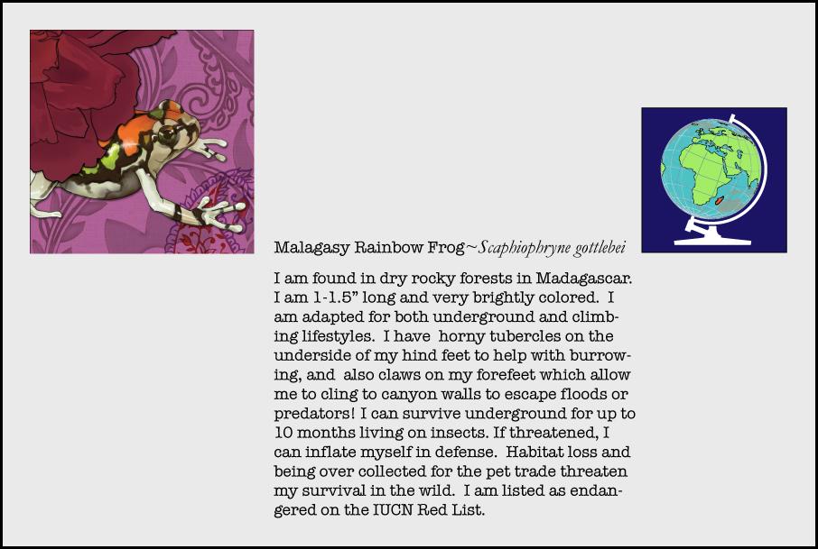 info-malagasy-rainbow-frog.jpg