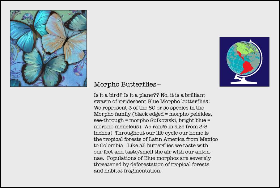 info-morpho.jpg